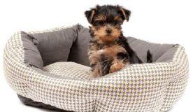 Cão Limpinho e Confortável!